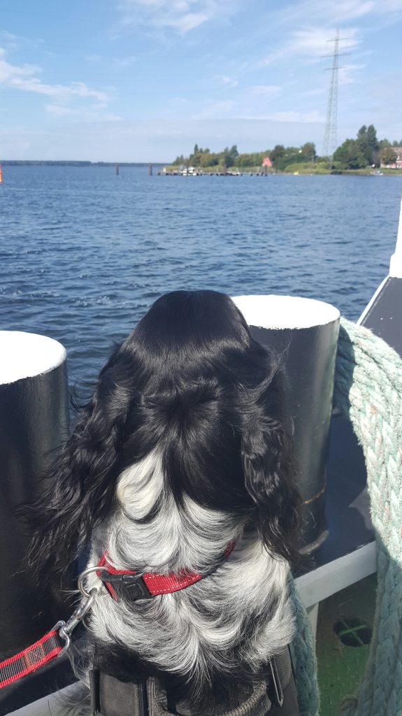 Dog Riding Ferry