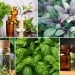 Essential Oils For Concentration And Memory