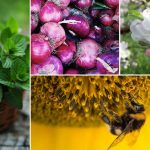Pollen Allergy Remedies