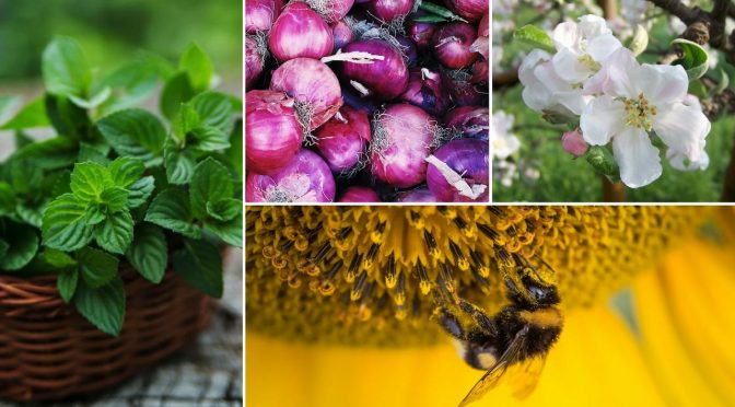 Pollen Allergy Remedies That Really Work Fast